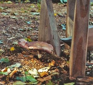Mushroom-Fence